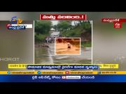 Drunken Man Tries to Cross the River | Swept Away in Flood | at Madhya Pradesh | Caught on Cam  (Video)