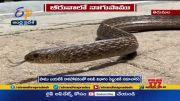 Snake Found in Hotel Beeruva at Tirumala  (Video)