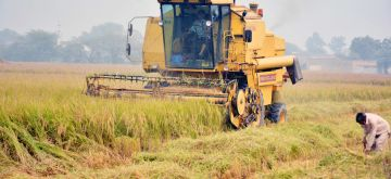 (171103) -- LAHORE, Nov. 3, 2017 (Xinhua) -- Pakistani farmers harvest rice on the outskirts of eastern Pakistan's Lahore on Nov. 3, 2017. Pakistan's rice exports surged by 28.74 percent during the first three months of the country's current fiscal year starting from July 2017, according to a statement from the Pakistan Bureau of Statistics (PBS). (Xinhua/Sajjad) (djj)
