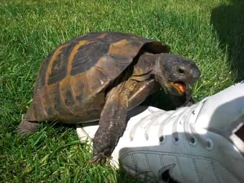 Turtle-Sex-With-A-Shoe
