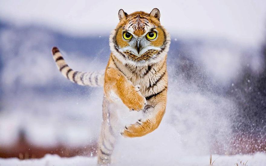 animal-hybrids-392