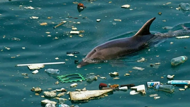 Plastic Might Be Convenient, But Is It Worth It?