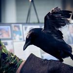 """""""Edgar Allan Crow"""""""