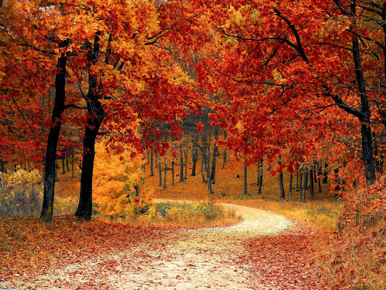 Your zodiac sign can tell you everything about what autumn means for you! Here's what you can expect this fall to bring you!