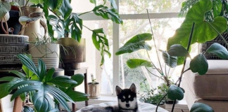 Plants have the power to confer coziness, color, and happiness to your house. Here we have recommended 5 indoor plants that can change your living room!