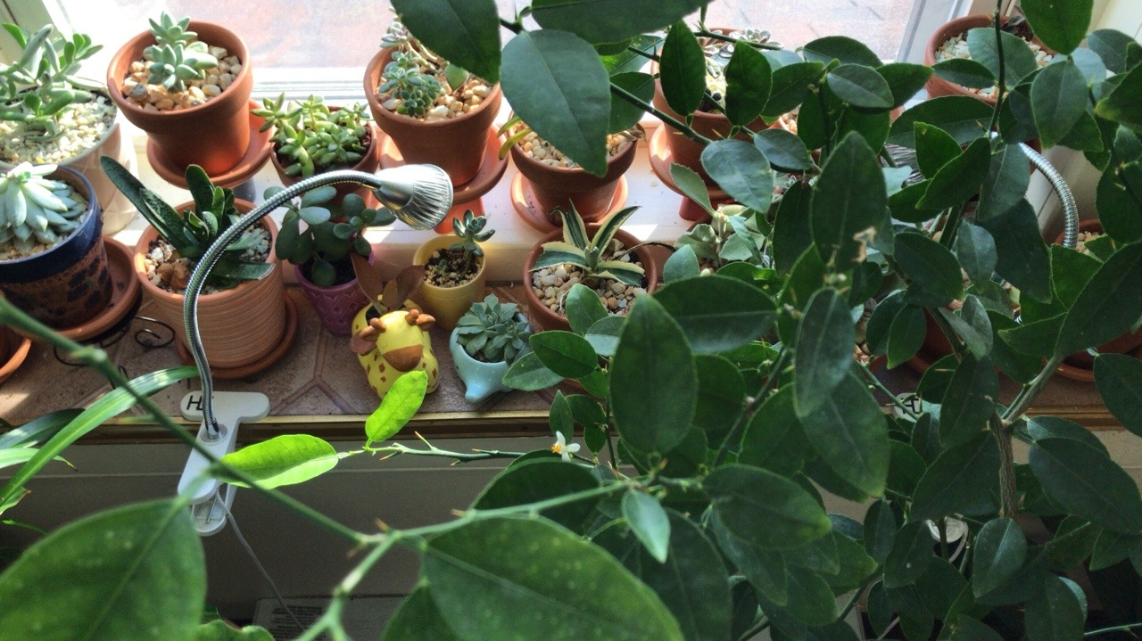 Low-maintenance houseplants are perfect to look at and easy to care for. If you have a history of neglecting flora, these are the plants for you.