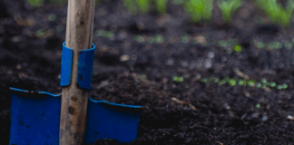 Summer gardening is all about making sure your garden is beautiful and lush. Here are some summer gardening tips to help you make your garden grow!