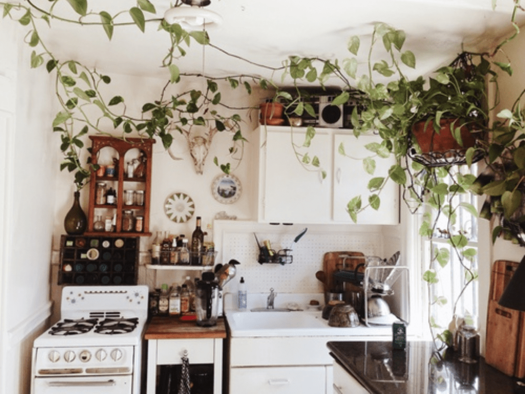 The kitchen is the room in the house that uses a lot of water and the most plastic. Read here to know how to make your kitchen more environmentally friendly
