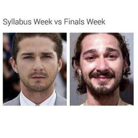 Shia Laboeuf's face change