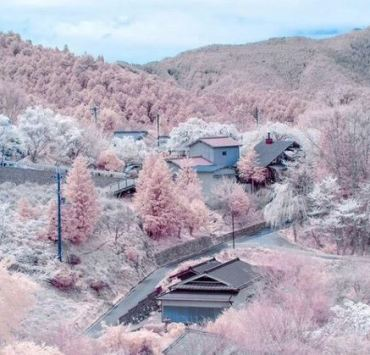 studying abroad in Japan, 20 Things to Know Before Studying Abroad in Japan