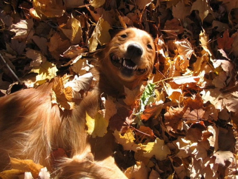 adorable dog in a leaf pile