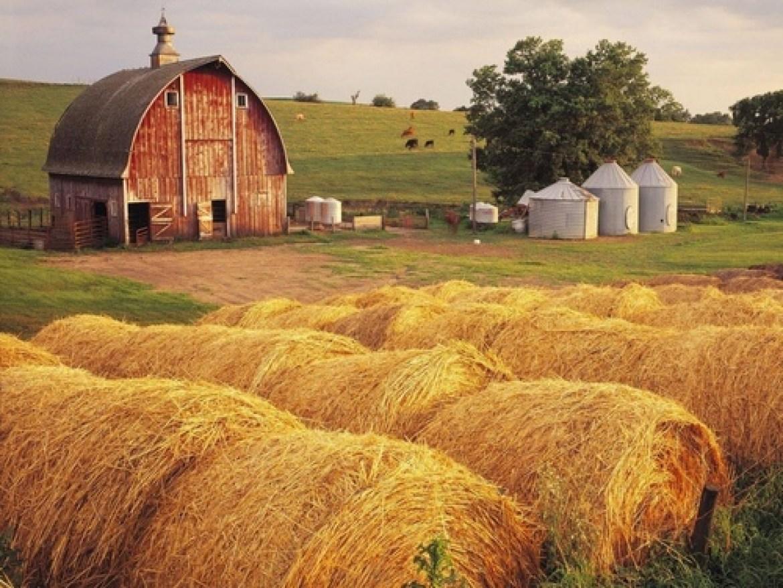 cute farm town