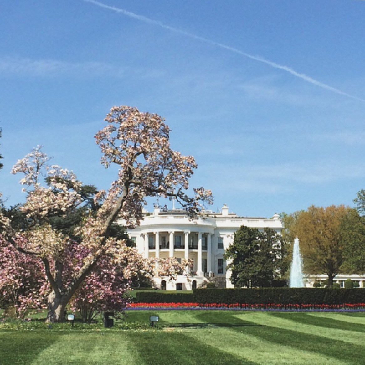 cool White House pic
