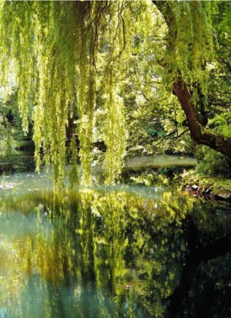 There are so many reasons why you should live in the south, but the beautiful weeping willows are just one of them!