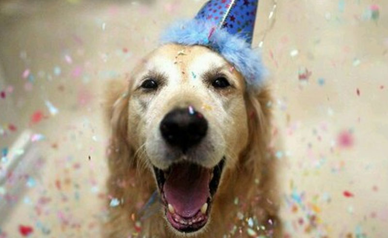 14 Dogs Having A Better Birthday Than You