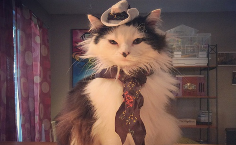 Here are cat cowboy hat pictures that are going to make you laugh & potentially confused. Everyone loves a cat wearing a cowboy hat. Or you will after this.