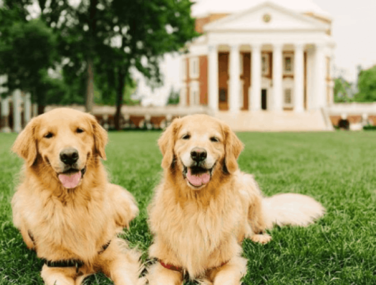Wondering if you want to become a UVA student? These pictures of UVA and it's Grounds will make you wish you were starting there today!