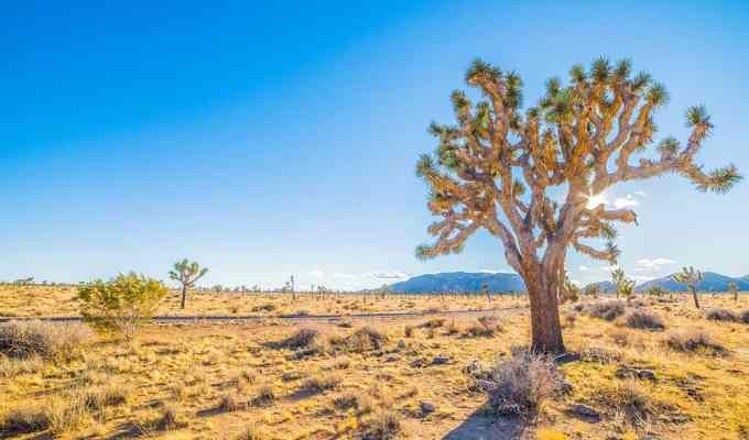 A desert doesn't seem like an exotic vacay, but trust us--it's stunning. Here are some fantastic things to do in the Sonoran Desert on your way out there!