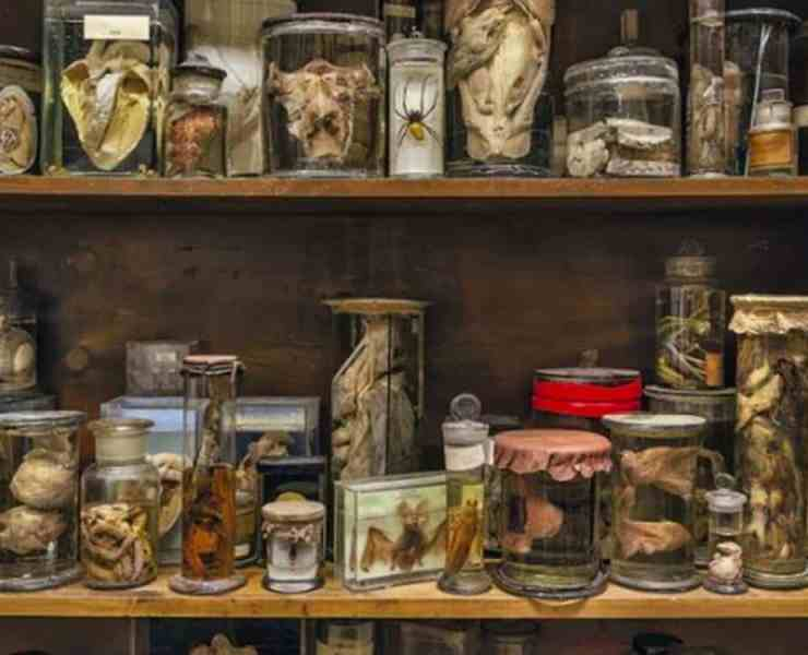 Here are some popular museums in London that you have to visit. These museums will give you history and education about living in London.