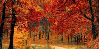 These fall getaways are some of the best locations you can travel to around the world to see the fall foliage this autumn!