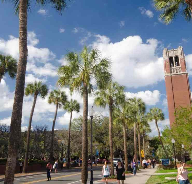 10 Easy Courses at University of Florida