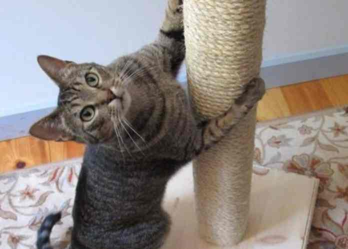 7 DIY Pet Ideas For Your Four Legged Friend