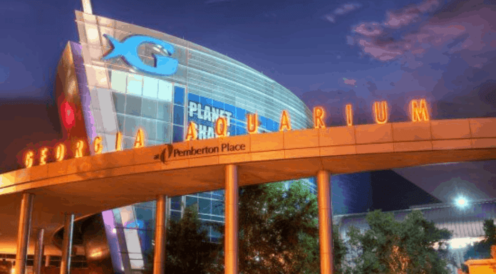 10 Things To Do At The Georgia Aquarium