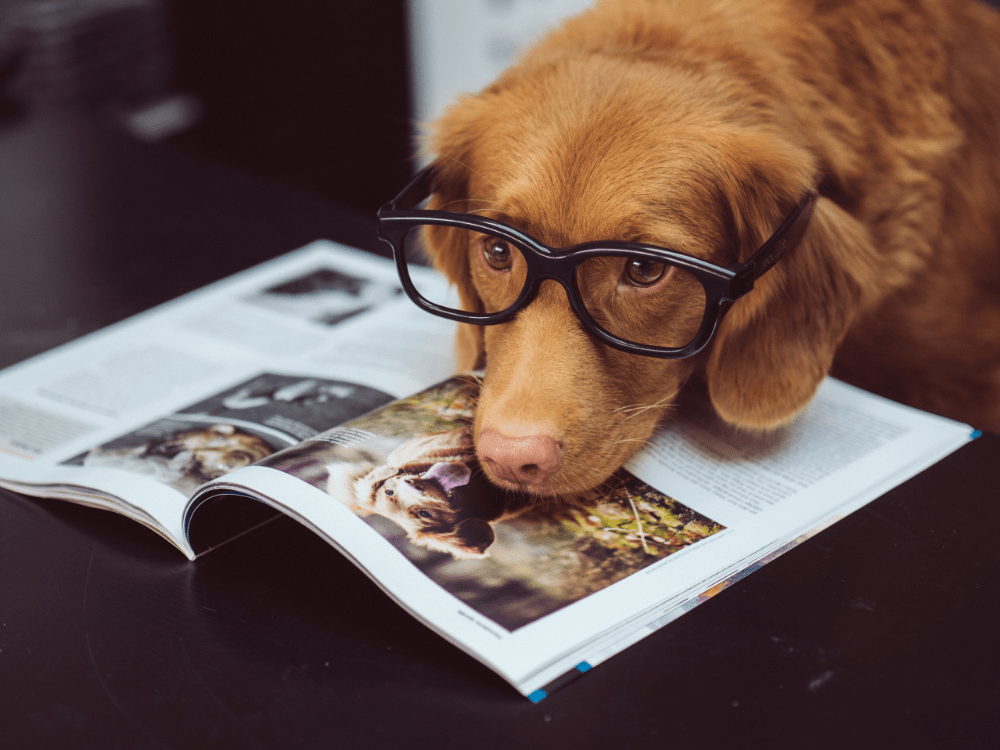10 Surprising Things Every Dog Owner Should Know