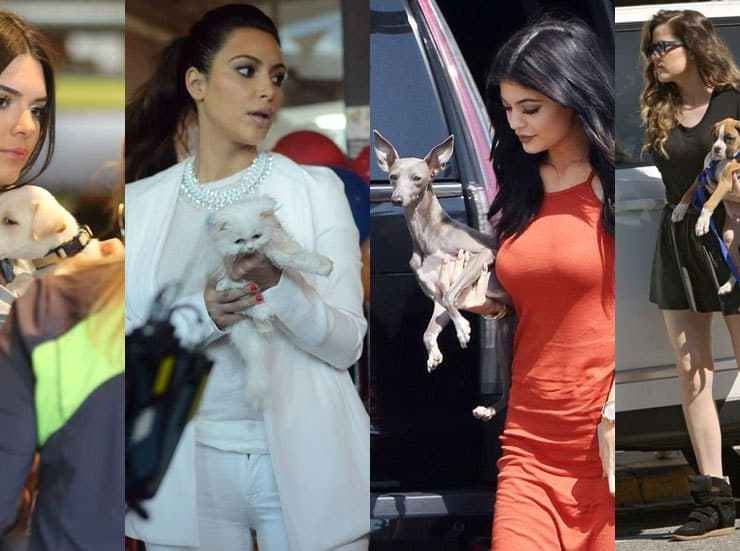 kardashian and jenner pets, Our Favorite Kardashian And Jenner Pets – Ranked!