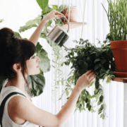 10 Ways To Decorate Your Apartment With Plants