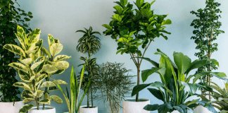 10 Cute Plants You Can Actually Keep Alive