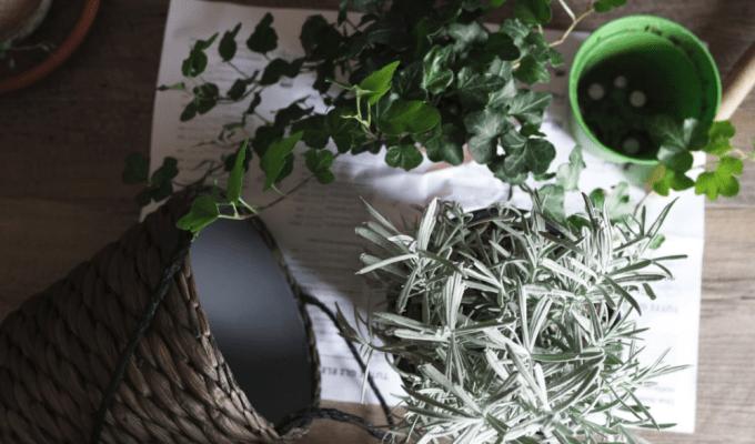 8 Dorm Room Plants That Even You Won't Kill