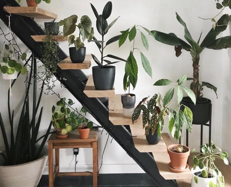 5 Plants That Both Look Great And Purify The Air