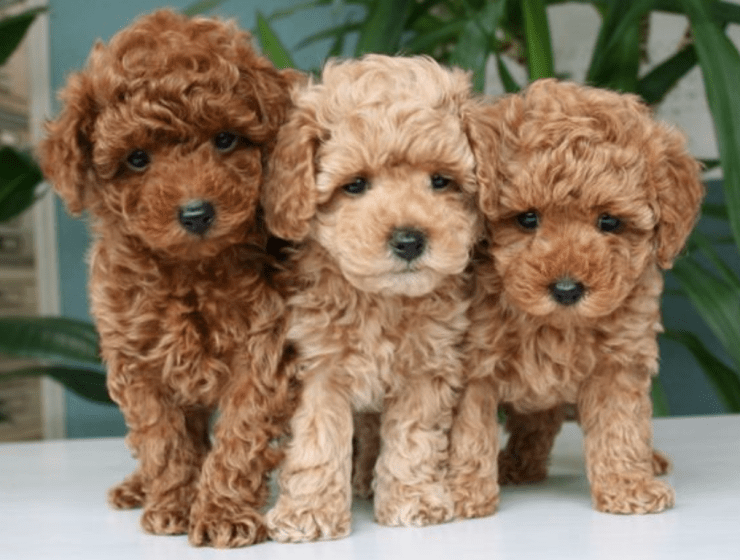 Your Dog Breed According To Your Zodiac Sign