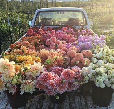 Flowers That Are A Must Have For Your Garden