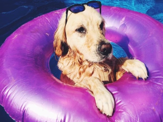 Summertime Pool Essentials Everyone Should Own