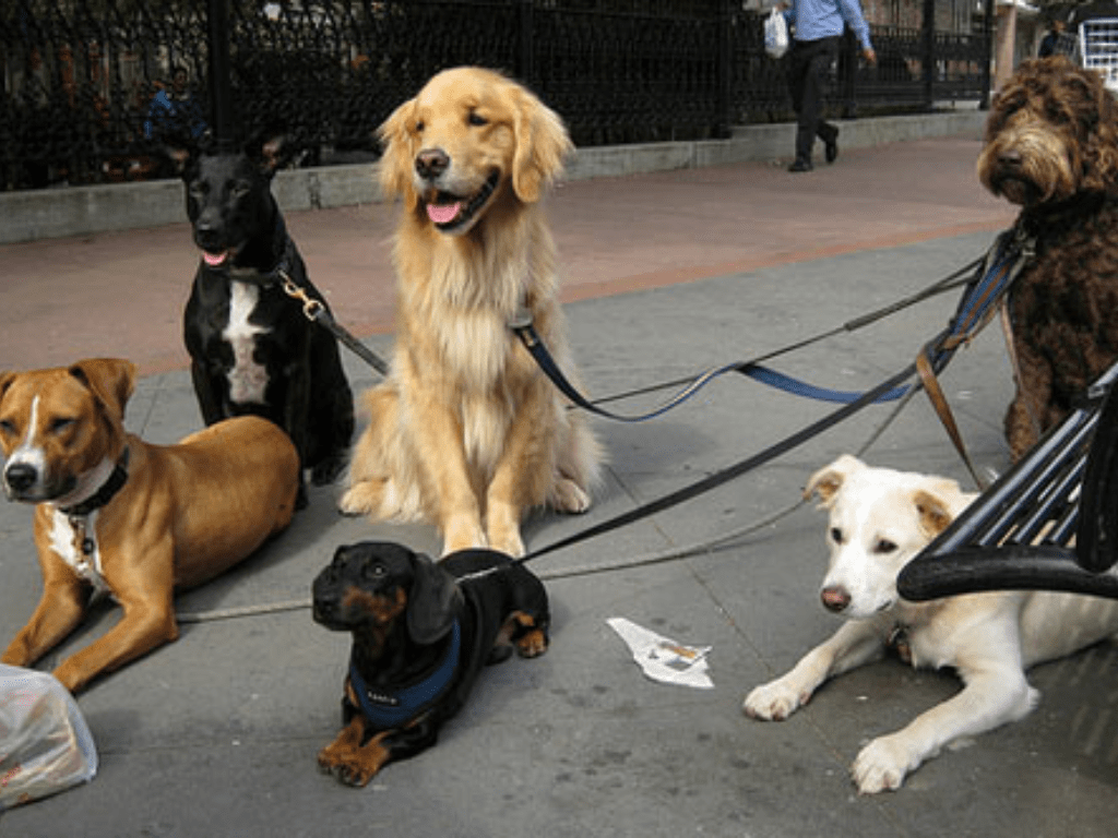 Dog Breeds, Dog Breeds That Suit The City Life