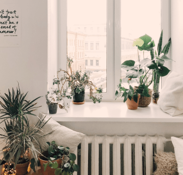 Plants, Easy Plants To Care For In A Dorm