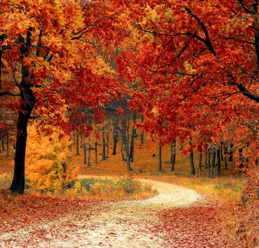 20 Fun Destinations For Leafers
