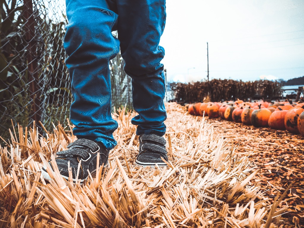 Fall Activities, The Best Fall Activities You Can Enjoy With The Family