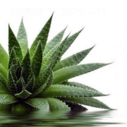 8 Benefits Of Aloe Vera You Didn't Know You Needed