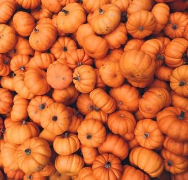 Pumpkin Recipes You'll Love This Fall