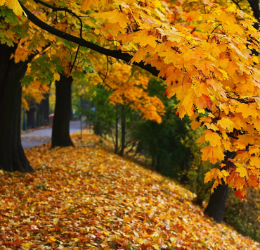 during the fall, 10 Things You Can Only Do During The Fall That You Don't Want To Miss Out On