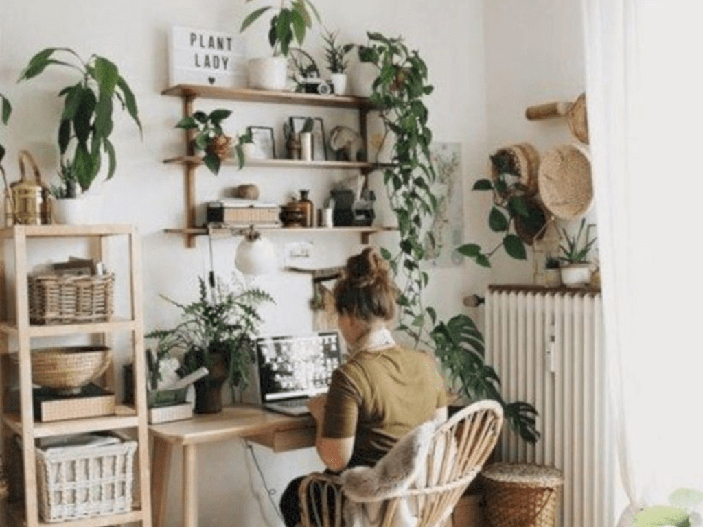 The Best Plants To Make Your Dorm look Boho Chic