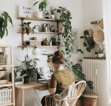Plants, The Best Plants To Make Your Dorm look Boho Chic