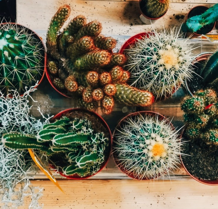 Here's Which Houseplant Should You Get Based On Your Zodiac Sign