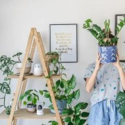 Household Plants, 12 Household Plants That Are Hard To Kill