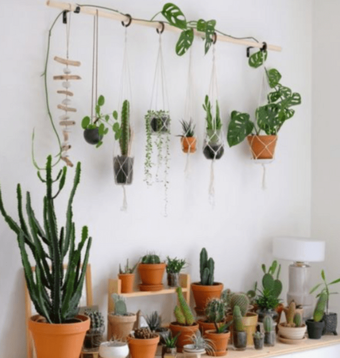 10 Cute Plants To Decorate Your Dorm Room With When You Go Back To School