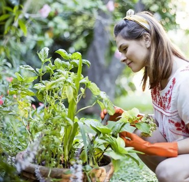 gardening tip, 10 Gardening Tips Perfect For Improving Your Green Thumb