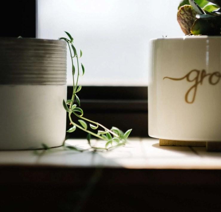 10 Houseplants To Brighten Up Your Quarantine Life